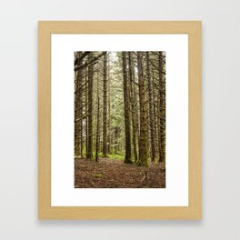 Old Growth Forest Photography Print Framed Art Print