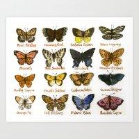 North American Butterflies Art Print