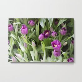 Longwood Gardens Orchid Extravaganza 25 Metal Print