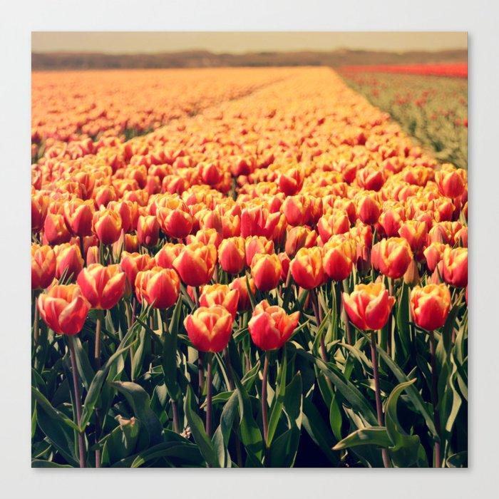Tulips field #6 Canvas Print