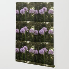 Purple Allium Ornamental Onion Flowers Blooming in a Spring Garden 4 Wallpaper