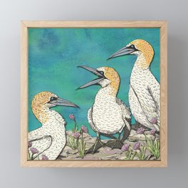 Gannets Framed Mini Art Print
