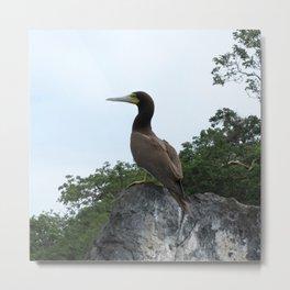 Watercolor Bird, Brown Booby 03, St John, USVI Metal Print