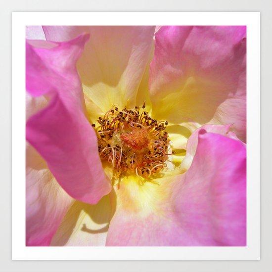 rose macro IV Art Print
