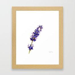 Mediterranean Lavender on White Framed Art Print