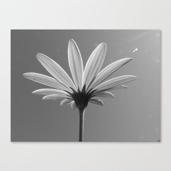 Lit Daisy Canvas Print