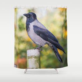 Hooded Crow Shower Curtain