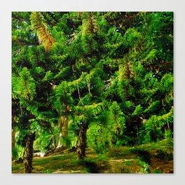 Magic of Trees Canvas Print