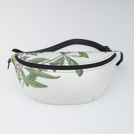 Plantae Selectae No 68-Lycium or Box-thorn by Georg Dionysius Ehret Fanny Pack