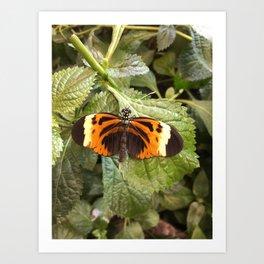 Black and Orange Beauty #3 Art Print