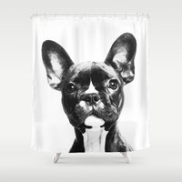french bulldog Shower Curtains featuring French BullDog by Maioriz Home