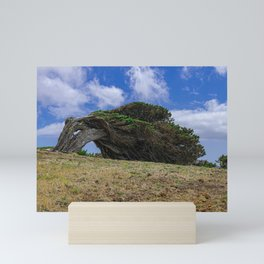 Phoenicean juniper Mini Art Print