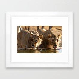 Asiatic Lion 13, Gir Forest, Gujrat, India Framed Art Print