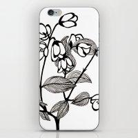 jasmine iPhone & iPod Skins featuring Jasmine by Dianadia