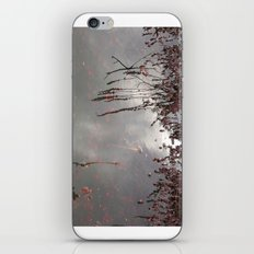 Cranberries Waiting To Be Harvested iPhone & iPod Skin