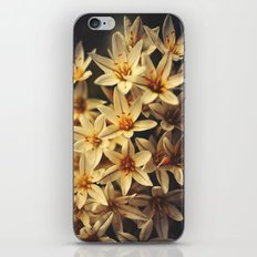 Celebrate Life iPhone & iPod Skin