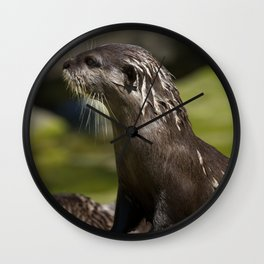 Otter Emerging From The Water Wall Clock