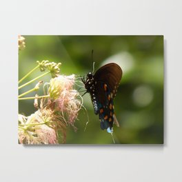 Mimosa & swallowtail Metal Print