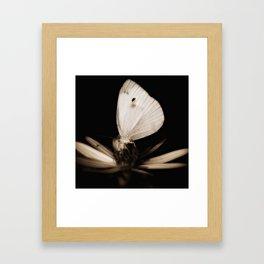 Paperwhite Framed Art Print