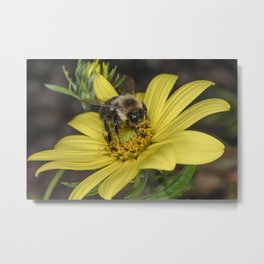 Busy as a Bee Metal Print