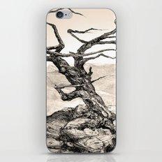 BRISTLECONE PINE iPhone & iPod Skin