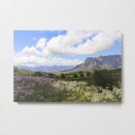 Stellenbosch Metal Print