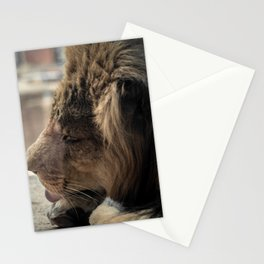 Big Cat Grooming Stationery Cards