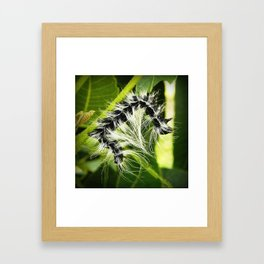 Walnut Caterpillar Framed Art Print