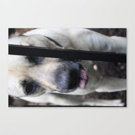 Dirty Dog Canvas Print