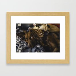 Irish Setter and Pug Relaxing Together Framed Art Print