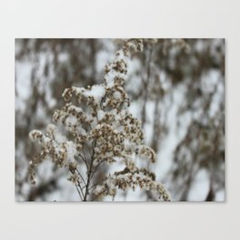 Blown by the snow Canvas Print