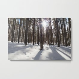 Yellowstone National Park - Lodgepole Forest 2 Metal Print