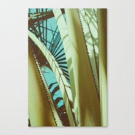 Tropical garden Canvas Print