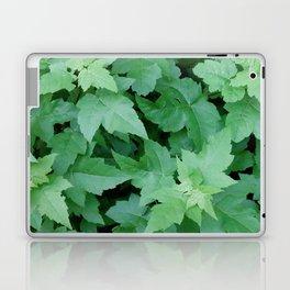 Settled Laptop & iPad Skin