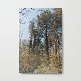 A Forest Walk Metal Print
