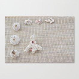 Seashells and urchins design Canvas Print
