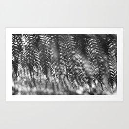Delicate Release Art Print
