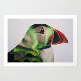 Puffin In Northern Lights Art Print