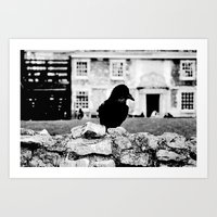London's Black Raven Art Print