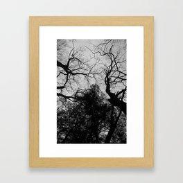 Souls of the Trees Framed Art Print