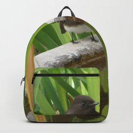 Black Phoebe at the Fountain Backpack
