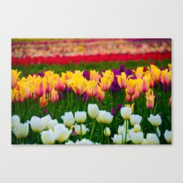 Fields of Color III, Woodburn Tulip Festival Canvas Print