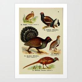 Common Quail Black Grouse Eurasian Capercaillie Gray Partridge Common Pheasant7 Art Print