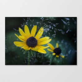 Natural Show Off Canvas Print