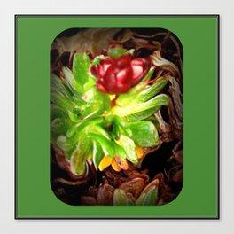 Surreal Succulent Canvas Print