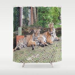 Indo-china Tigers_Buddies Shower Curtain