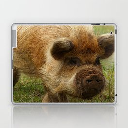March of the Ginger Pig Laptop & iPad Skin