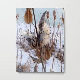 Milkweed in Winter Metal Print