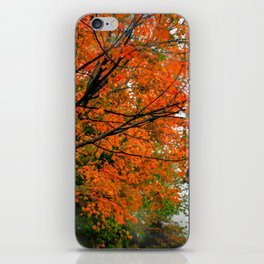 Autumn at the Window iPhone Skin