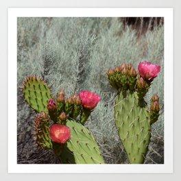 Cacti in Bloom - 3 Art Print